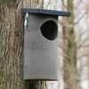 CJ Woodstone Tawny Owl Box
