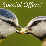 Wild Bird Care Special Offers